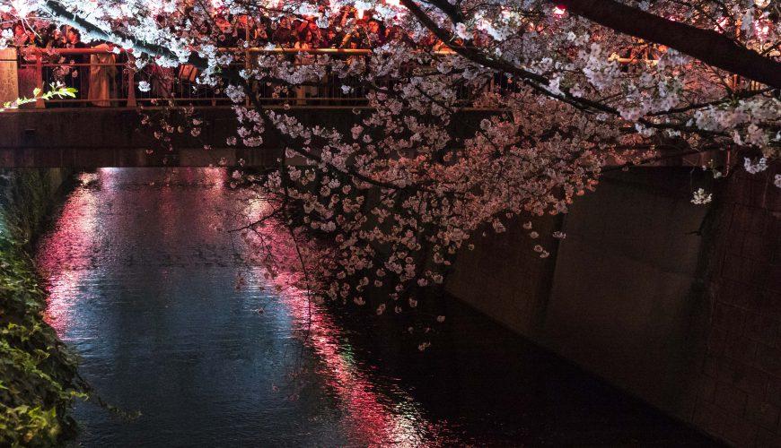 Illumination at Naka-Meguro